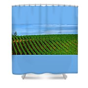 Chardonnay Sky 17990 Shower Curtain