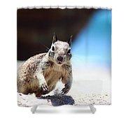 Charging Ground Squirrel Shower Curtain