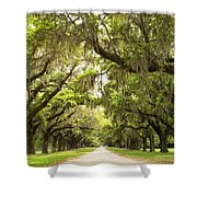 Charleston Avenue Of Oaks Shower Curtain by Stephanie McDowell