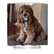 Charley At Home Shower Curtain