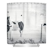 Charlie The Friendly Mare Shower Curtain
