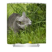 Chartreux Cat And Grass Shower Curtain