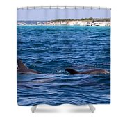 Chasing Dolphins  Shower Curtain