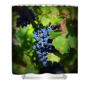 Chateauneuf Du Pape Hidden Treasure Shower Curtain
