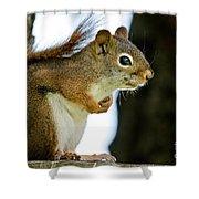 Chatty Squirrel Shower Curtain