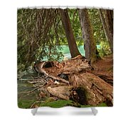 Cheakamus Lake Rainforest - British Columbia Shower Curtain