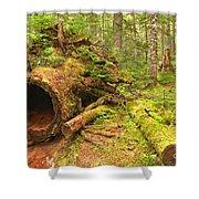 Cheakamus Old Growth Cedar Stumps Shower Curtain