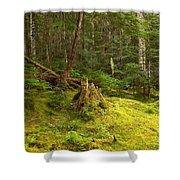 Cheakamus Rainforest Floor Shower Curtain