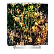 Cheat Grass 15750 Shower Curtain