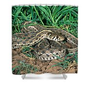 Checkered Garter Snake Shower Curtain