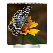 Checkered Skipper Square Shower Curtain
