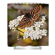 Checkerspot Butterfly On A Yarrow Blossom Shower Curtain