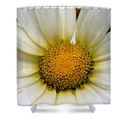 Cheery Daisy  Shower Curtain