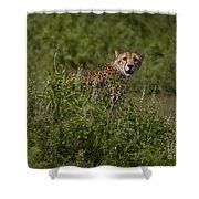 Cheetah   #0093 Shower Curtain