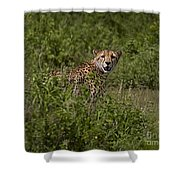 Cheetah   #0095 Shower Curtain