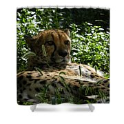 Cheetah 2 Shower Curtain