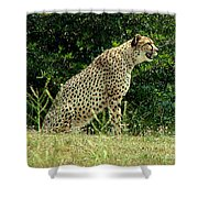 Cheetah-79 Shower Curtain