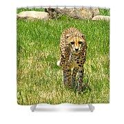 Cheetah Approaching Shower Curtain