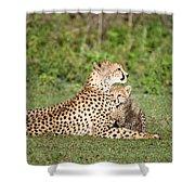 Cheetah Cub Acinonyx Jubatus Playing Shower Curtain