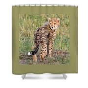 Cheetah Cub Looking Your Way Shower Curtain