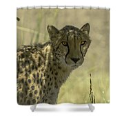 Cheetah Gaze Shower Curtain