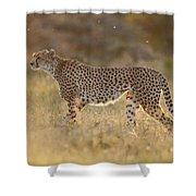 Cheetah In Grassland Kenya Shower Curtain