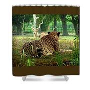 Cheetah Lunch-87 Shower Curtain