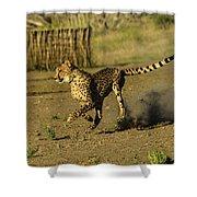 Cheetah On The Run Shower Curtain