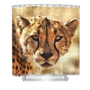 Cheetah One Shower Curtain