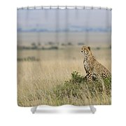 Cheetah Perched On A Mound Shower Curtain