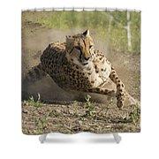 Cheetah Run 2 Shower Curtain