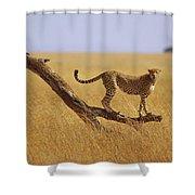 Cheetah Standing On Dead Tree Shower Curtain