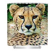 Cheetah Stare L Shower Curtain