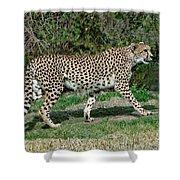 Cheetah Strolling Shower Curtain