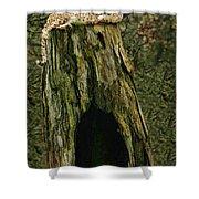 Cheetah Tree Perch Shower Curtain