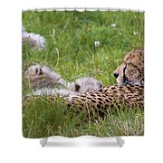 Cheetah With Cubs Shower Curtain