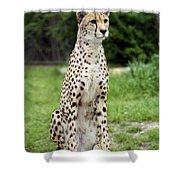 Cheetah's 01 Shower Curtain