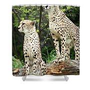 Cheetah's 02 Shower Curtain
