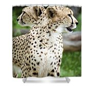 Cheetah's 04 Shower Curtain