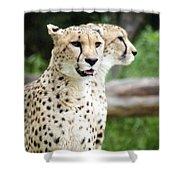 Cheetah's 05 Shower Curtain