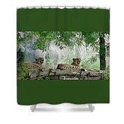 Cheetahs-120 Shower Curtain