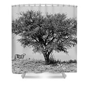 Cheetahs And A Tree Shower Curtain
