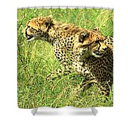 Cheetahs Running Shower Curtain