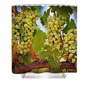 Chelan Grapevines Shower Curtain
