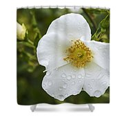 Cherokee Rose With Rain Drops Shower Curtain