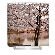 Cherry Basin Shower Curtain
