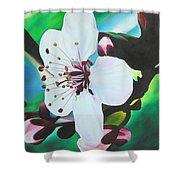 Cherry Blosom Shower Curtain