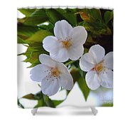 Cherry Blossom 2 Shower Curtain