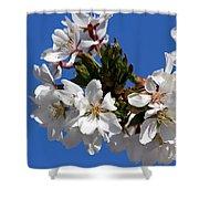 Cherry Blossom Blue Sky - 1 Shower Curtain