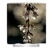 Cherry Blossom Bokeh Shower Curtain